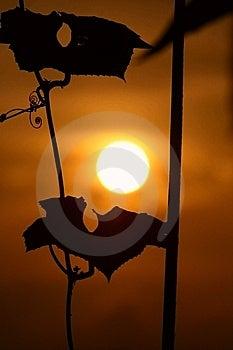 Sundown Stock Photos - Image: 5505623