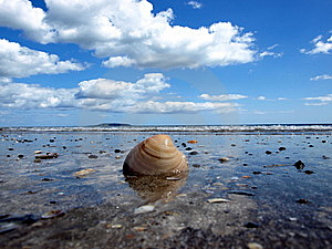 Shell At Beach Stock Images - Image: 5516494