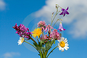 Bunch Of Wildflowers Stock Photography - Image: 5518442