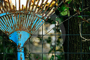 Old Blue Rake Royalty Free Stock Photography - Image: 5529927