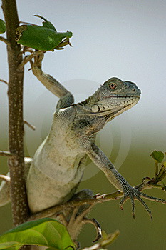 On The Lookout Stock Images - Image: 5532244