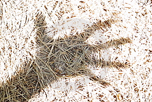 Мертвые ель-иглы в тени руки Стоковое Фото - изображение: 5534810