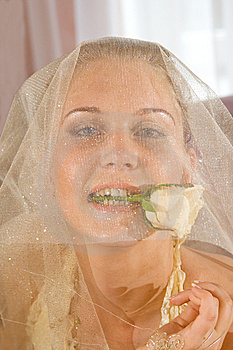 Wedding Portrait Stock Photos - Image: 5535643