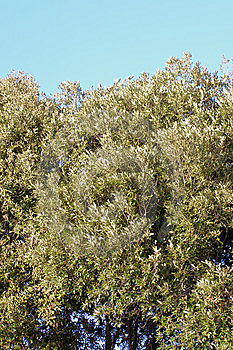 Mediterranean Vegetation Against Blue Sky Royalty Free Stock Images - Image: 5540699