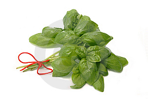 Herb Basil Royalty Free Stock Photo - Image: 5545545