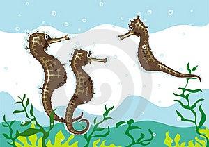 Seahorse 01 Stock Image - Image: 5548881