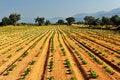 Vegetable farm Stock Photo