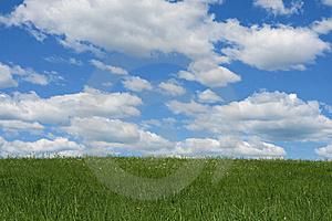 Green Field And The Blue Sky Royalty Free Stock Images - Image: 5554789