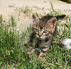 Kitty Walking Royalty Free Stock Images - Image: 5568179