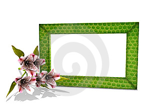 Photo Frame In Snake Skin With A Flower Royalty Free Stock Photography - Image: 5577987