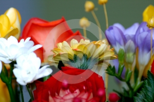 Stock Image - Flowers