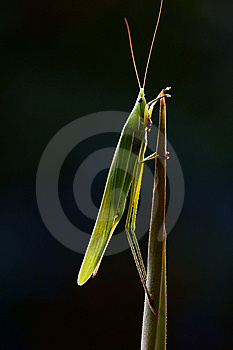 Lighting Bug Royalty Free Stock Photography - Image: 5601707
