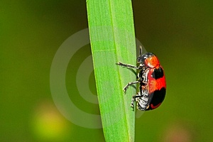 Bug On The Plant Royalty Free Stock Photo - Image: 5602745