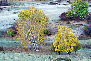 Silver Birch Stock Images - Image: 5612034
