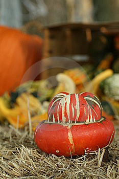 Strange Pumpkin Stock Images - Image: 5615794