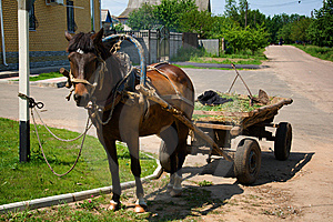 Horse-drawn Vehicle In Rural Area Stock Photography - Image: 5617192