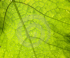 Detailed Leaf Of Salad Royalty Free Stock Image - Image: 5618056