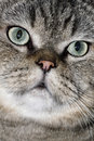 Lovely face of the cat Royalty Free Stock Photo