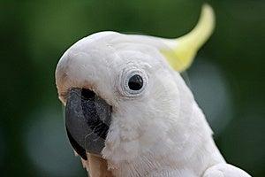 Parrots  Eye Detail Stock Photo - Image: 5620350