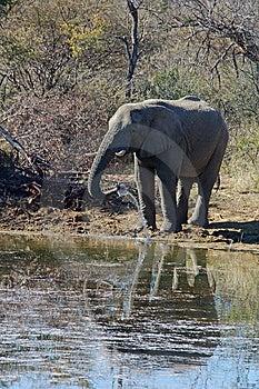 Wildlife Stock Image - Image: 5621491