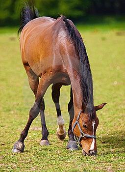 Slim Horse Royalty Free Stock Images - Image: 5624089