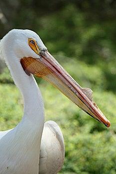 Large Bird Stock Photography - Image: 5630632