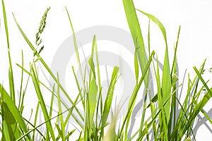Stock Photography - Green Grass