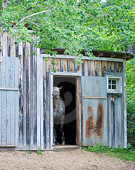 Koń W Sta11 Obraz Stock - Obraz: 5638961
