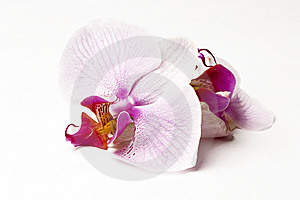 Spa scenery - orchid Stock Photo