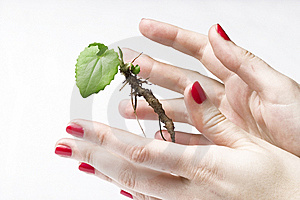 New life in hands Royalty Free Stock Images
