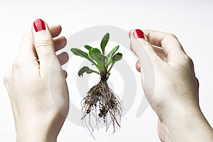 New Life Between Hands Royalty Free Stock Photo - Image: 5648265