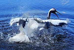 Crane Stock Photography - Image: 5655132