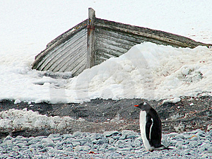 Penguin And The Boat Royalty Free Stock Image - Image: 5657976
