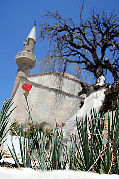 Mosque, Old Tree And Flower Stock Photography - Image: 5660692