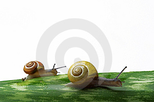 Snails Walking On A Leaf Royalty Free Stock Images - Image: 5661899