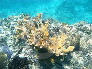 Underwater Stag Coral Stock Photo - Image: 5667330