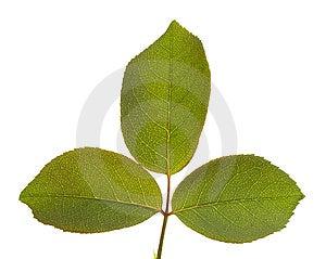 Leaves Macro Isolated Stock Photos - Image: 5676263