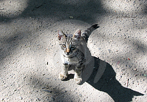 Hungry Kitty Royalty Free Stock Photos - Image: 5677758