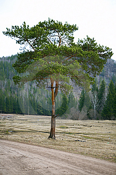 Alone Tree Royalty Free Stock Images - Image: 5682249