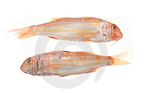 Pair Of Red Mullet Royalty Free Stock Photos - Image: 5687278