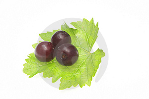 Grapes On Vine Leaf Stock Photography - Image: 5687292