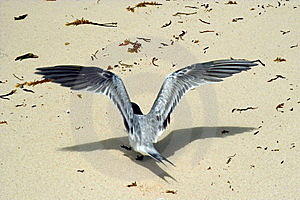 Bird Is Taking-off. The First Flight. Royalty Free Stock Photos - Image: 5687708