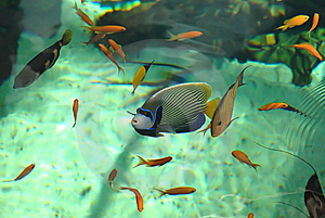Shoal Of Colorful Tropical Fish Royalty Free Stock Image - Image: 5694716