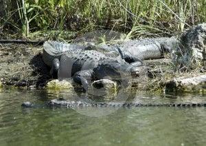 Predator Stock Image - Image: 572371