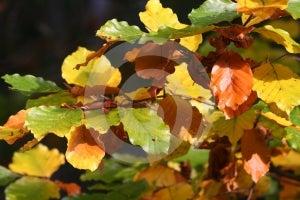 Autumn Trees, Poland Stock Photo - Image: 578970
