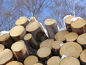 Living Trees And Dead Timber Royalty Free Stock Photo - Image: 579935