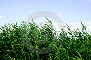 Green Grass Stock Images - Image: 5702564