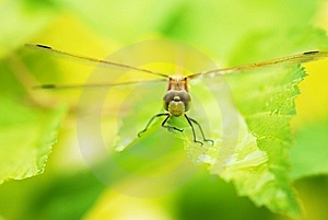 Dragonfly Stock Photography - Image: 5713462
