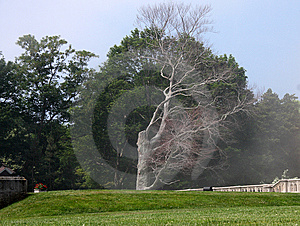 Scary Tree Royalty Free Stock Photos - Image: 5729218