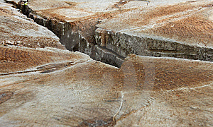 Wood Trunk Crevice Royalty Free Stock Photos - Image: 5731378